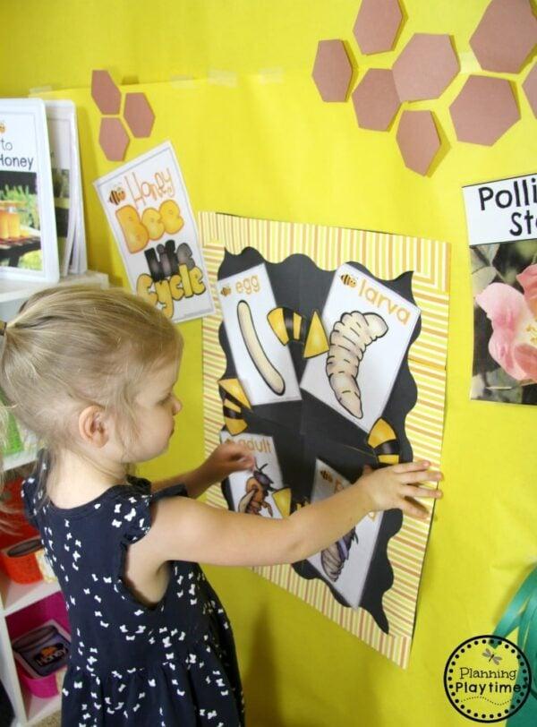 Honey Bee Life Cycle Station - Preschool Dramatic Play Center #preschool #dramaticplay #dramaticplaycenter #preschoolideas #planningplaytime