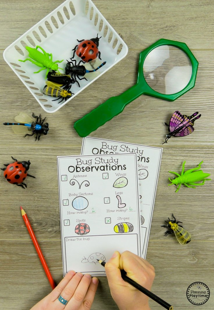 Bug Activities Planning Playtime