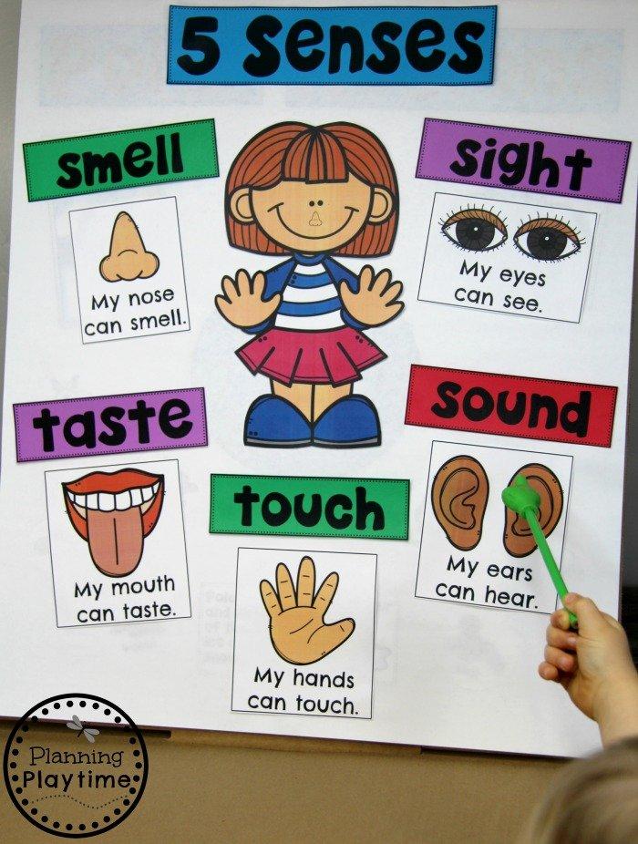 Preschool Anchor Chart - The 5 Senses #5senses #preschoolthemes #preschoolcenters #planningplaytime #anchorcharts